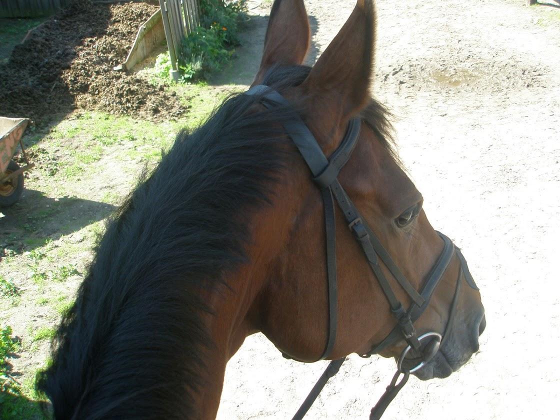 Ponykamp 2011 - week 2 (deel 2)