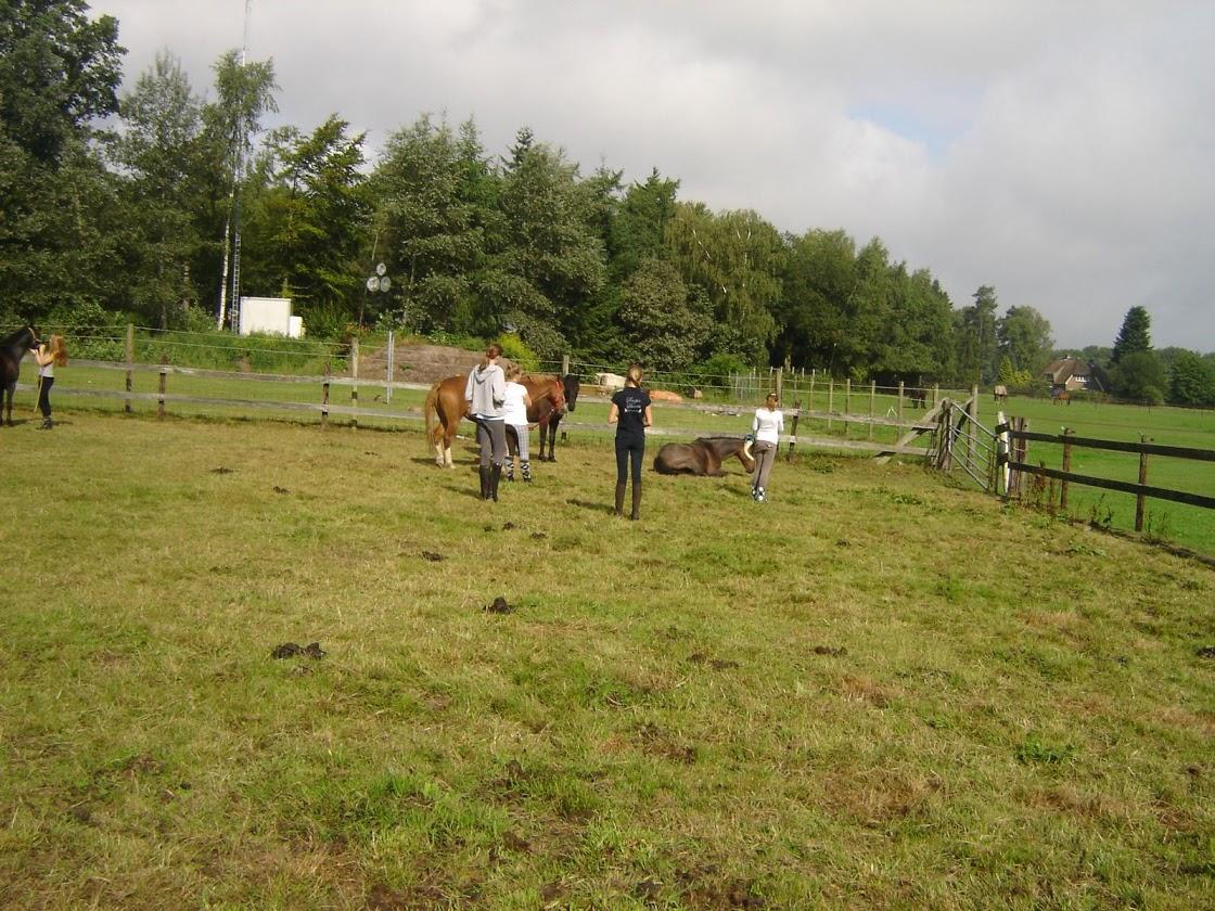 Ponykamp 2011 - week 2